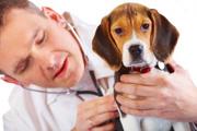 Guia de urgencias veterinarias