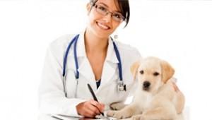 urgencias veterinarias 24 horas en Madrid