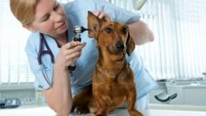 urgencias veterinarias Madrid centro