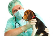 CV Medican: Urgencias veterinarias en Madrid