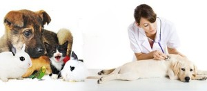 clinica-veterinaria-urgencias-madrid